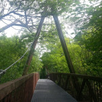 Bridge in forest