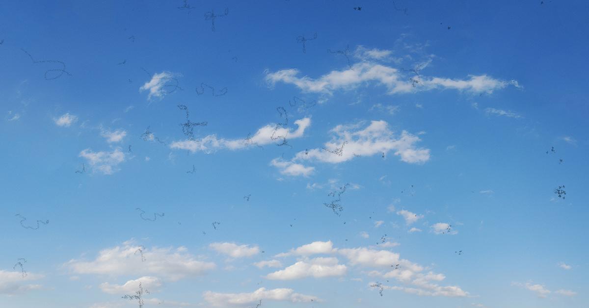 flecks on the blue sky