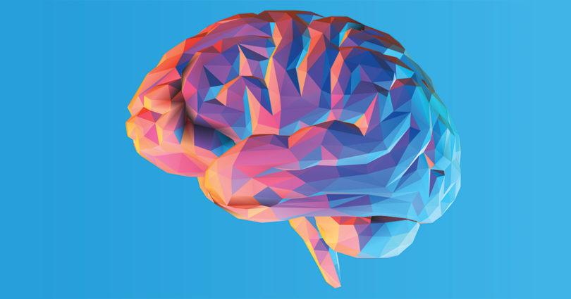 brain evolution of consciouness